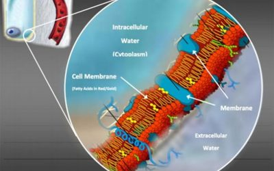 Extracellular Water